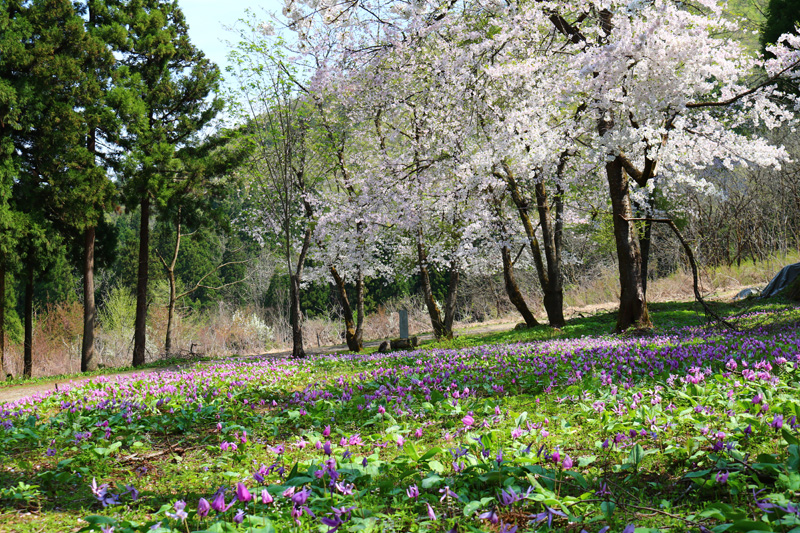 2017.4.29 sat. 芽吹く、華咲く!賑わう坂戸山