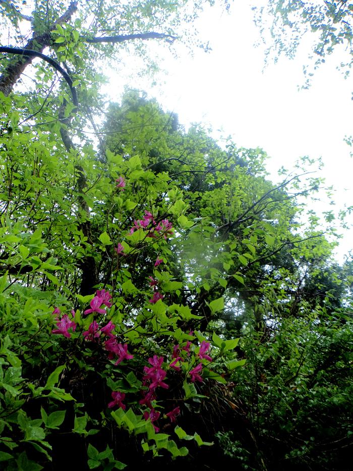 2017.5.6 sat. 「雨だったらもう、ラッキー」くらいの坂戸山。