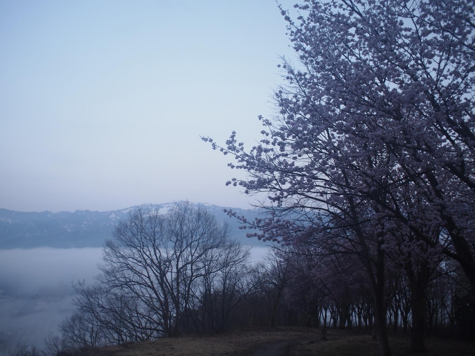 2018.4.10 tue. 春の花と夜明け前の雲海 BY HUNTER-SHISHIMAI
